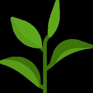 aromas herbales
